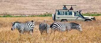 4-Days Budget Safari Itinerarary Manyara ,Serengeti ,Ngorongoro.