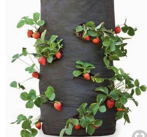 Miche ya strawberry