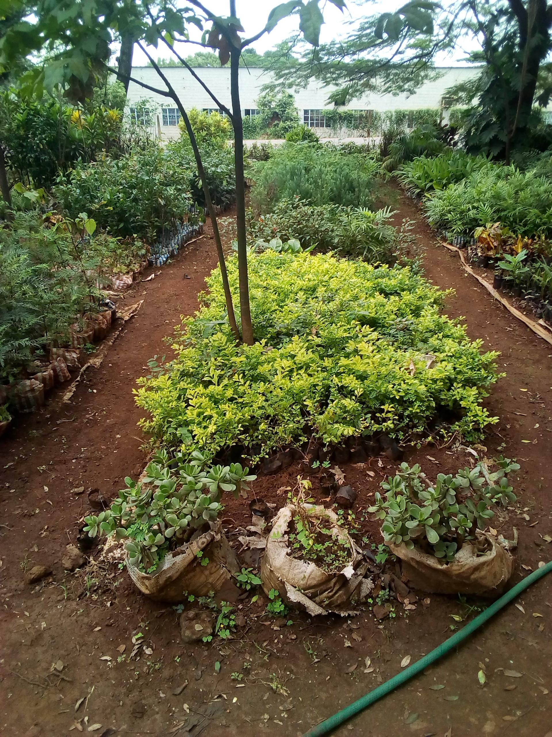 Rekapa garden ni garden nzuri ya maua na miti ya matunda