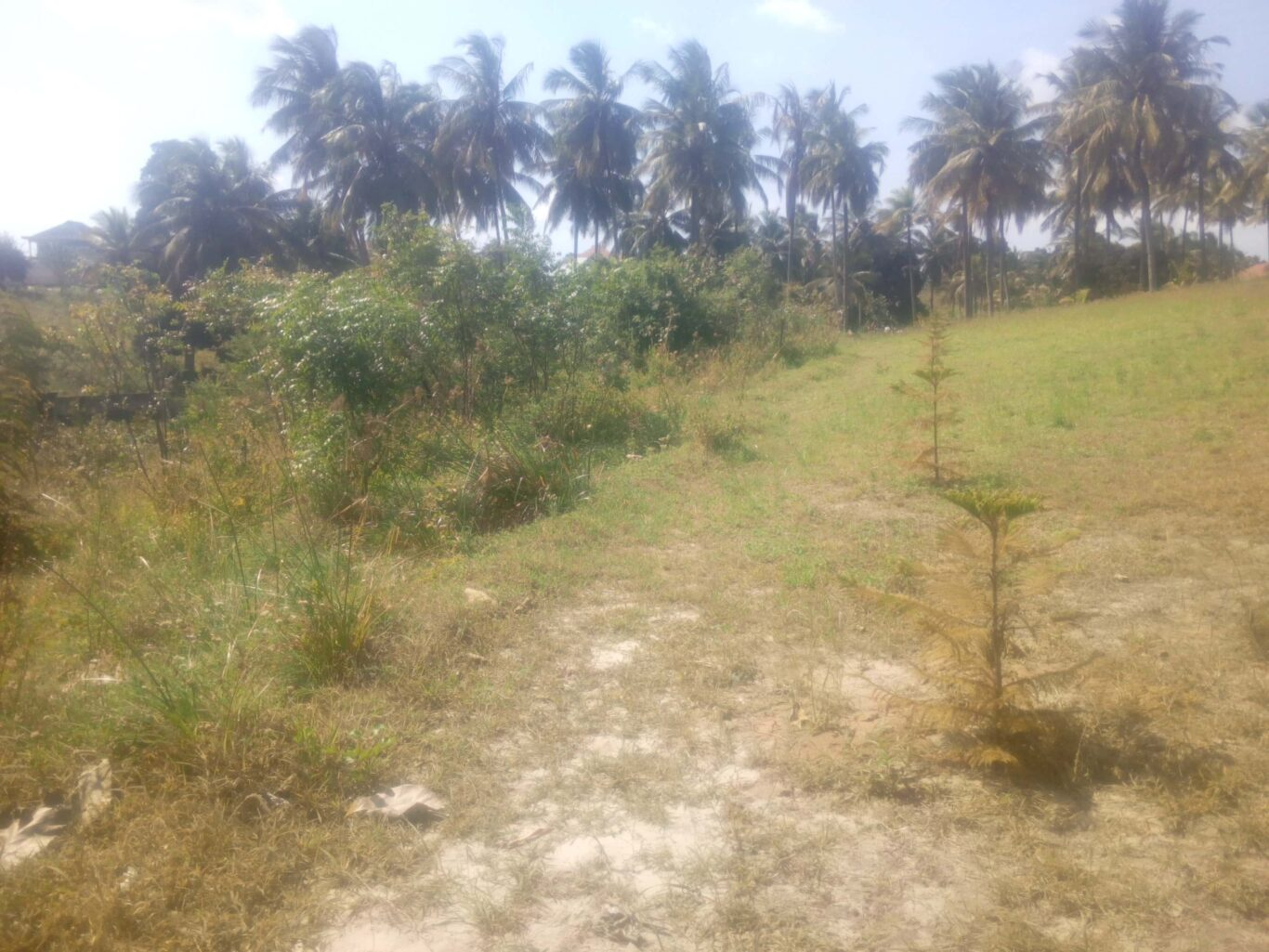 Plot with 2372 SQM for sale Goba Maghorofani