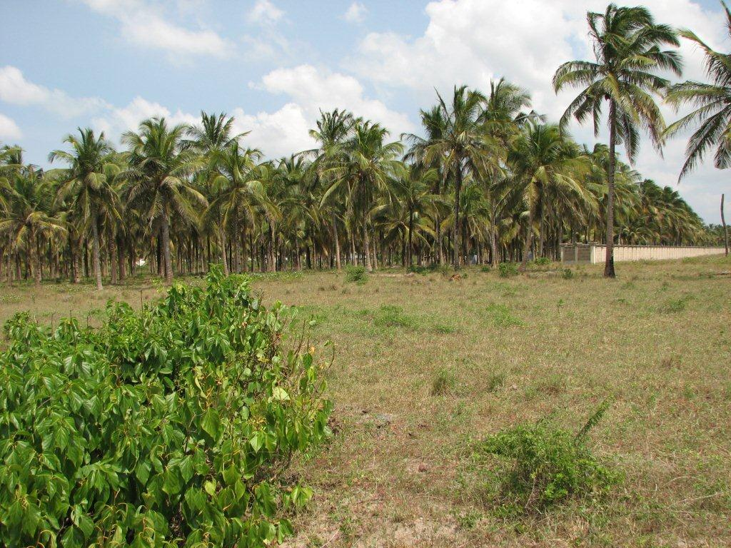 11 acres of a beach plot for sale