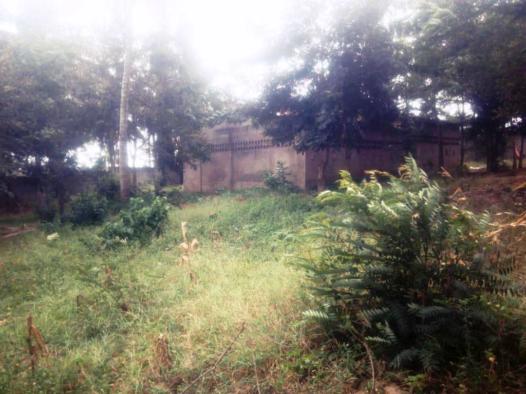 3200sqm fenced plot for sale