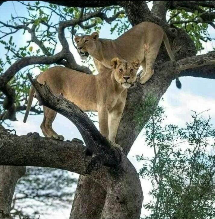 savage tanzania adventure